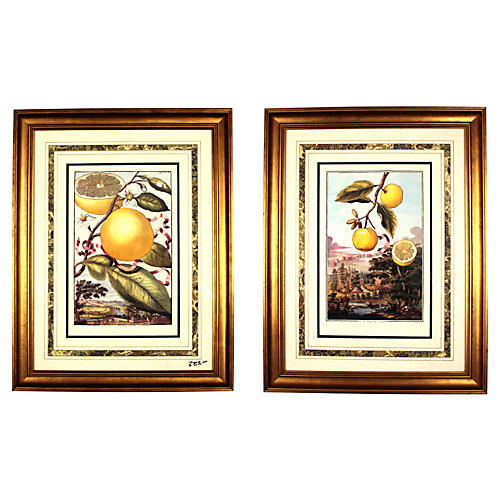 Citrus Fruit Prints, Pair