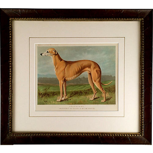 Greyhound, C. 1881