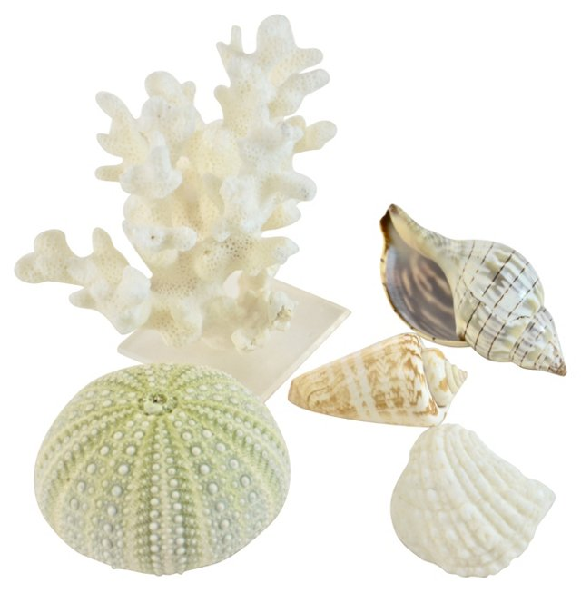 Coral & Shell Collection, S/5