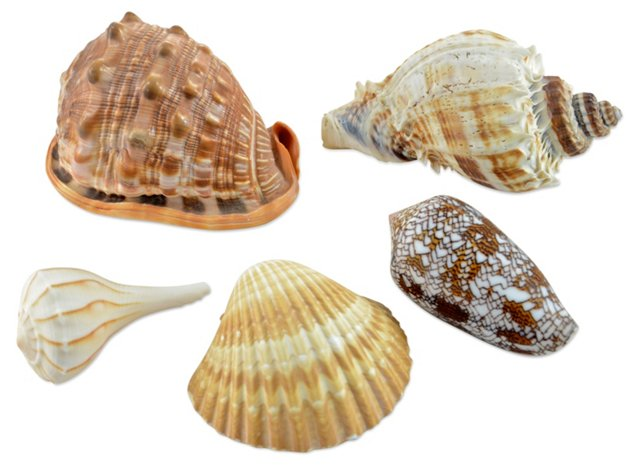 Shell Collection, S/5