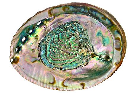 Aquamarine Abalone Shell