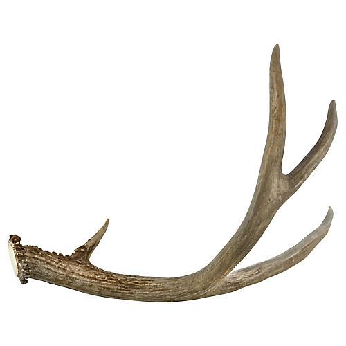 Natural 4-Point Gray Deer Antler