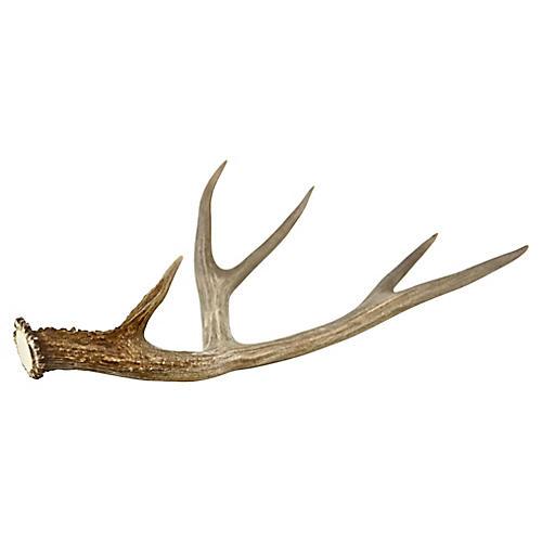 Natural 5-Point Gray Deer Antler