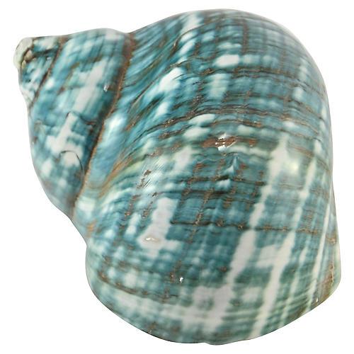 Aqua Blue-Green Turbo Shell