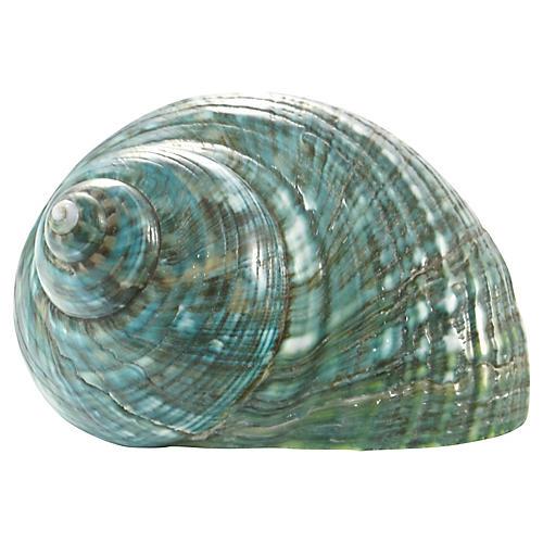 Teal Turbo Shell