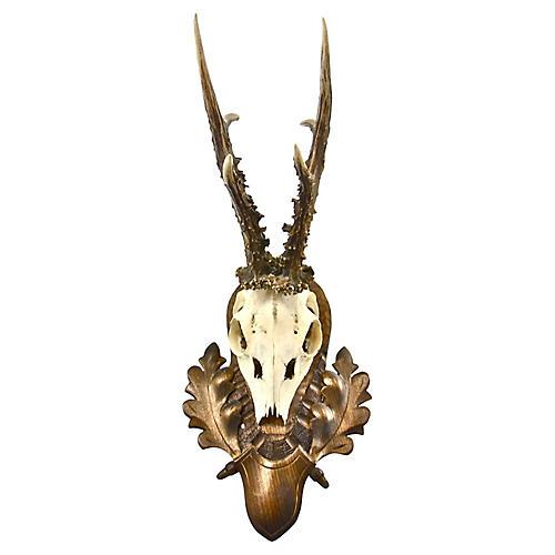 """European 14"""" Mounted Roe Buck Antlers"""