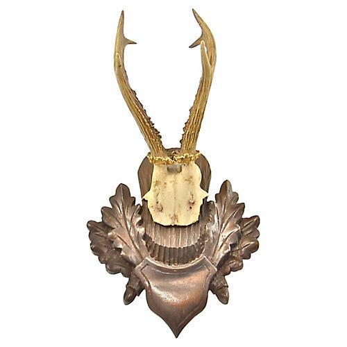 Mounted European Roe Buck Antlers