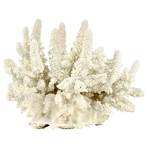 Natural Coral Cluster