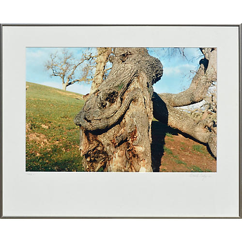 Coastal Oak Tree by Deborah Eddy
