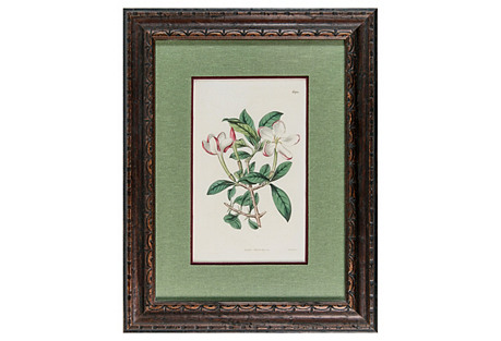 19th-C. Colored Apple Blossom Engraving