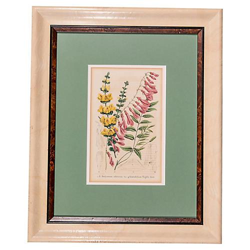 19th-C English Floral Engraving