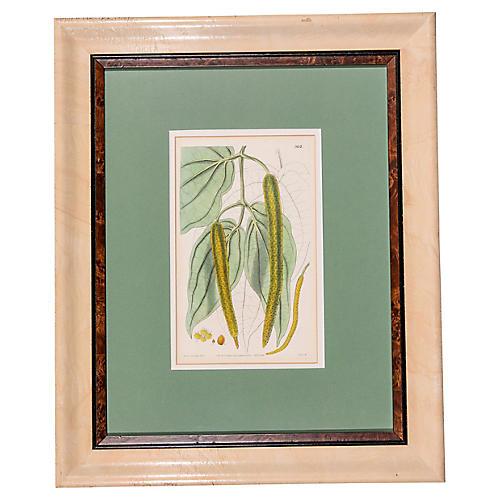 19th-C. English Leaf Print