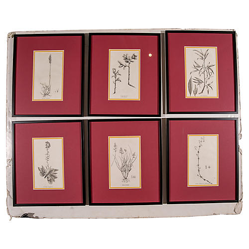 18th-C. Botanical Prints, S/6