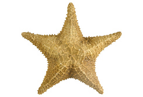 Grand Starfish