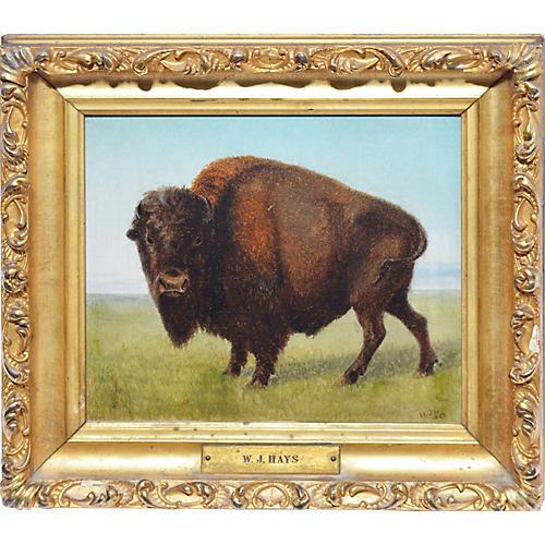 American Buffalo Western Frontier View