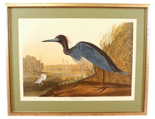 Blue Heron, Audubon Leipzig Edition
