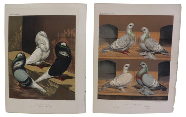 Pigeon Book Plates, Pair