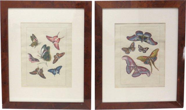 Butterfly Studies, 1803, Pair