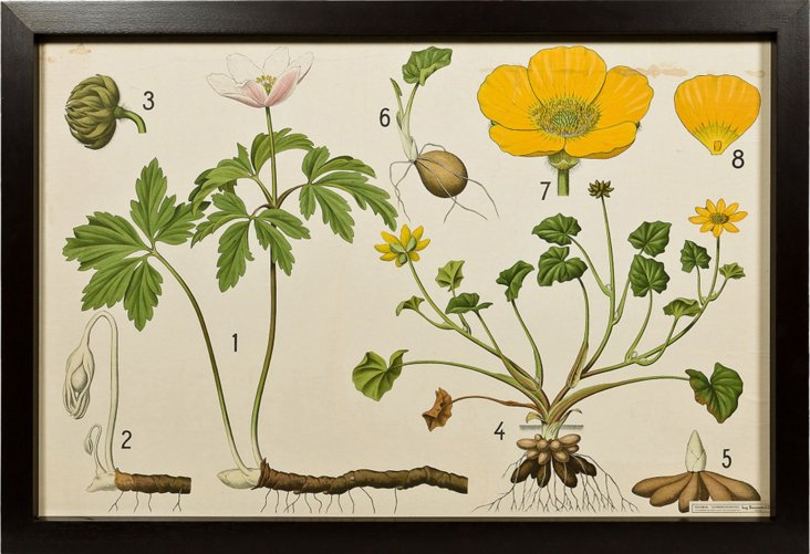 Framed Educational Flower Plate