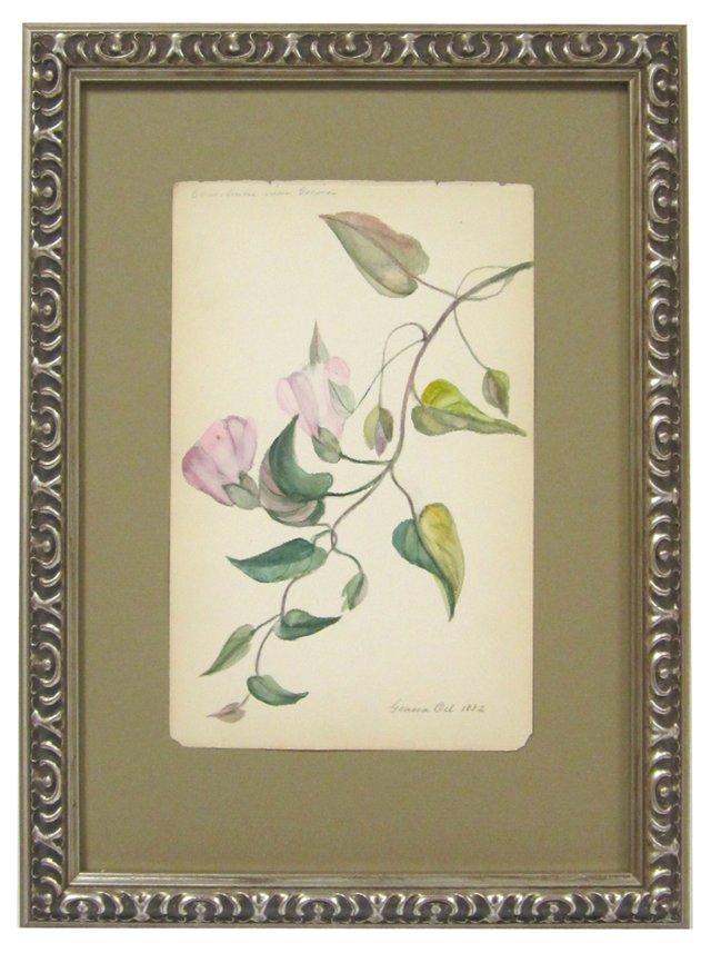 Morning Glory Watercolor, 1882