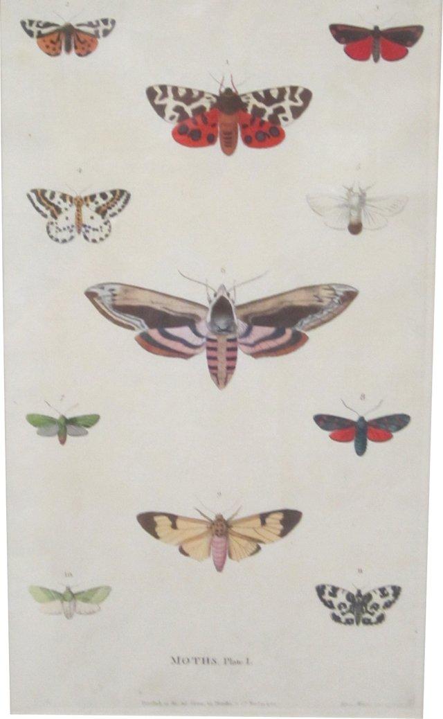 Engraving of Moths, 1785