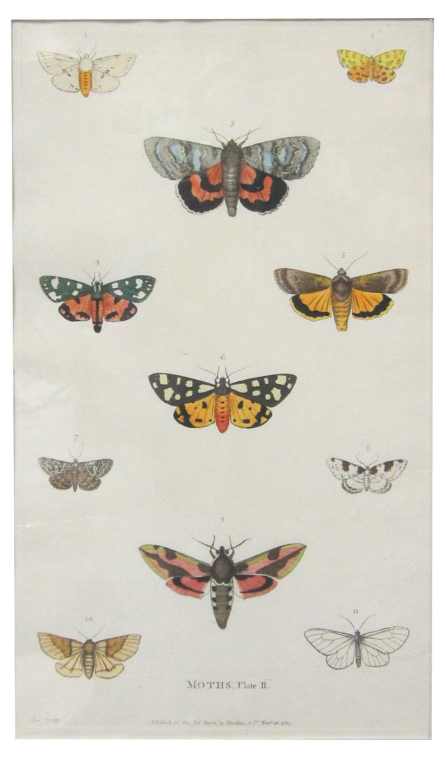 Engraving of Moths,   1785