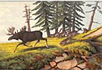 Moose, 1867