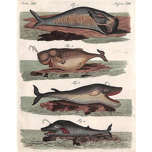 Whale Engraving, 1810