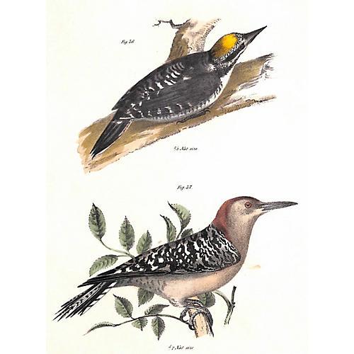 Woodpeckers, 1843