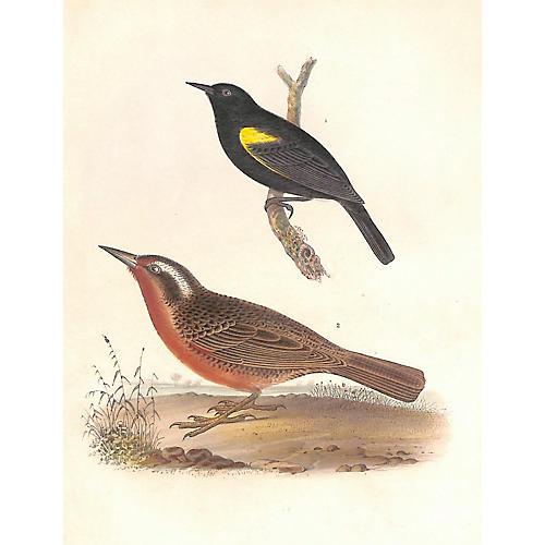 Blackbird & Meadowlark, 1855