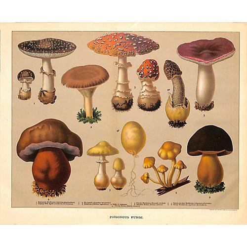 Poisonous Mushrooms, 1900