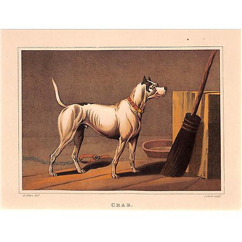Antique Dog Print, Yard Dog, 1903