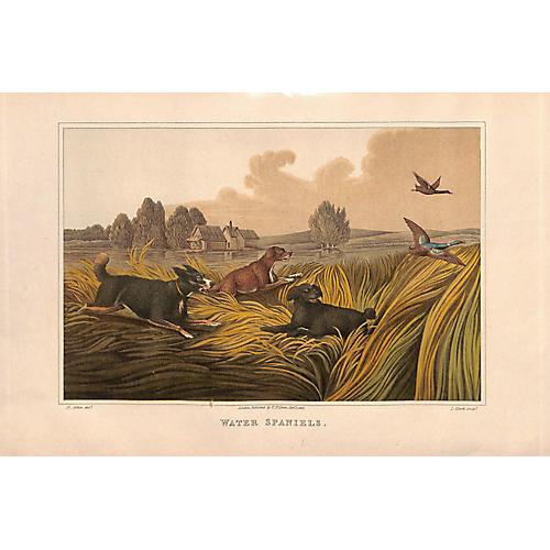 Spaniels, Water Spaniels, Dogs, 1903