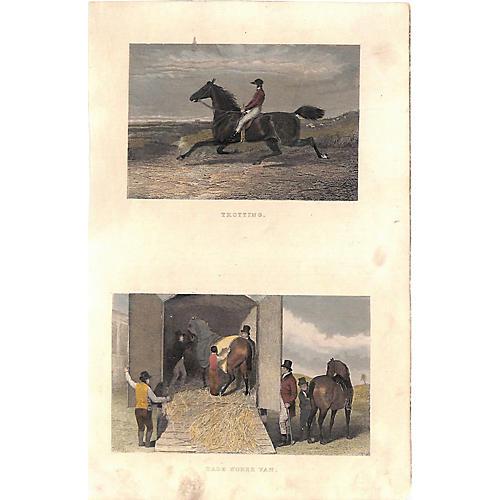 Race Horse, Trotting, Transport, 1868