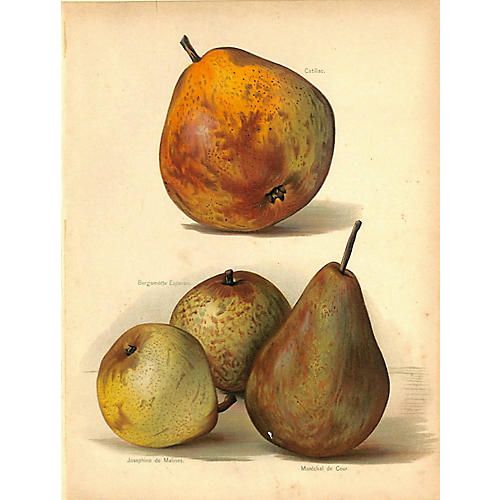 Pears, Antique Print, 1892