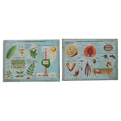 1950s Botanical Science Plaques, Pair