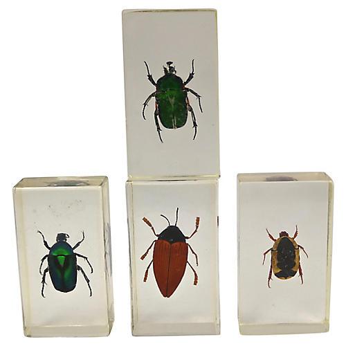 Entomology Science Specimens, S/4
