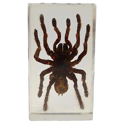 Entomology Tarantula Specimen