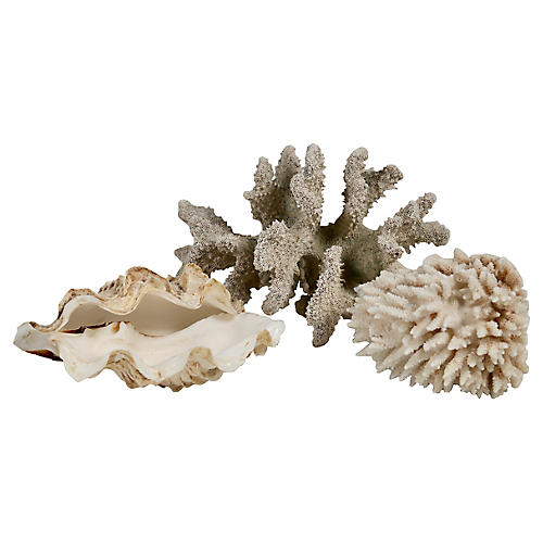 Shell & Coral Specimen Grouping, 3 Pcs