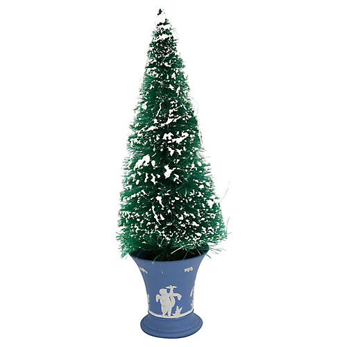 Bottle Brush Tree in Wedgwood Cherub Pot