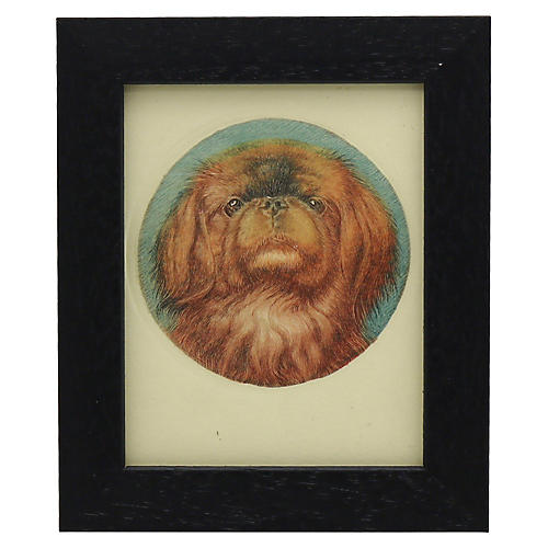 1920s Hand-Colored Pekingese Engraving