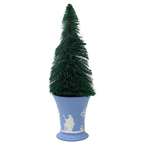 Bottle Brush Tree in Wedgwood Cherub Pot