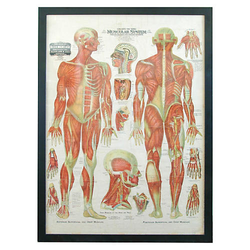 Antique Medical Chart