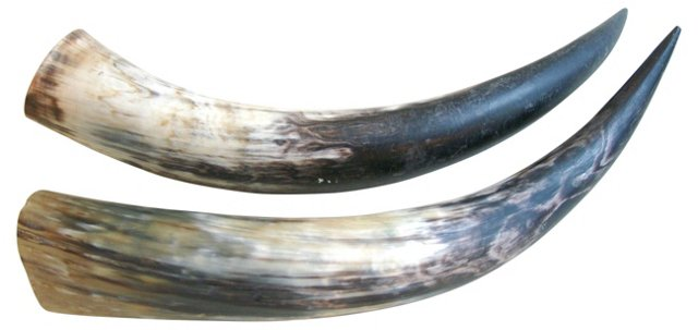 Polished Cattle Horns, Pair