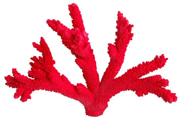 Red Branch Coral