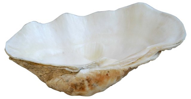 Saltwater                  Clamshell