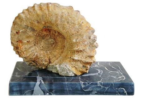 Sandstone Ammonite Fossil on Marble