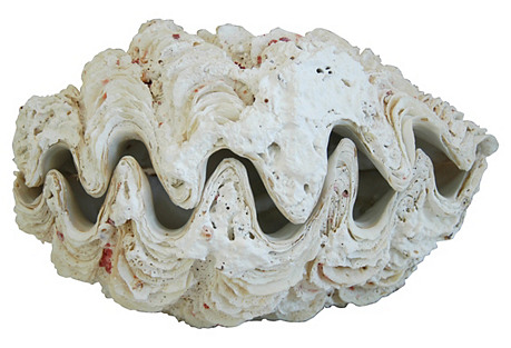 Antique Nautical Full Clamshell, 2 Pcs