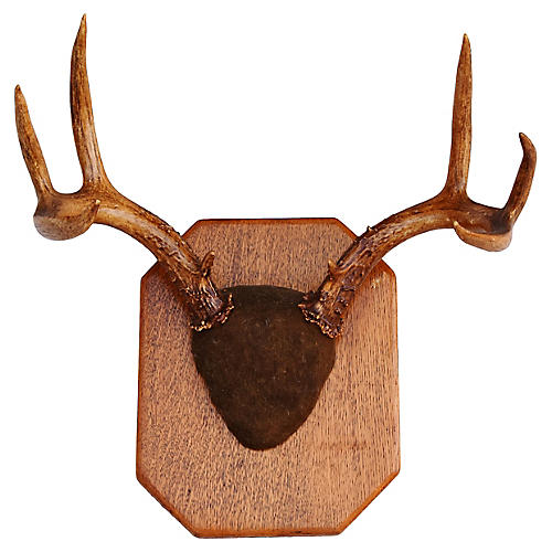 Mounted Antlers on Wood Plaque