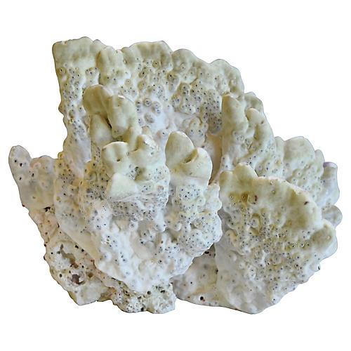 Natural Ocean Sea Green Coral Specimen